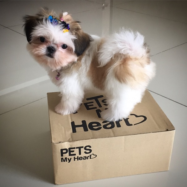 Pets My Heart Happiness Box 💗
